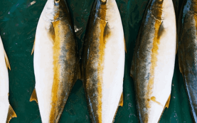 Hoe gezond of ongezond is het eten van vis?