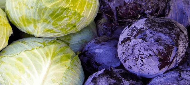 Welke groente kan je fermenteren - Rode kool, witte kool en spitskoool zijn geschikt voor fermentatie