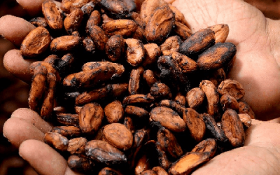 Is cacao gezond?