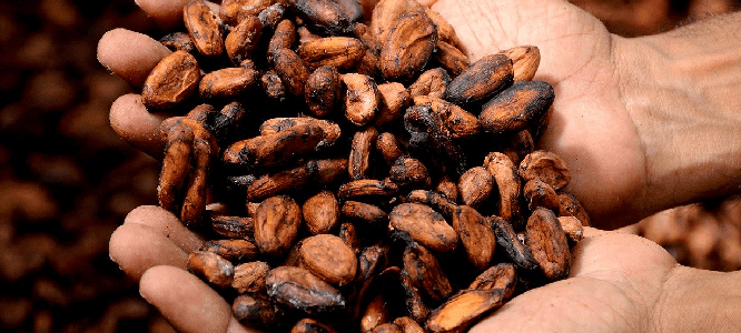 Is cacao gezond